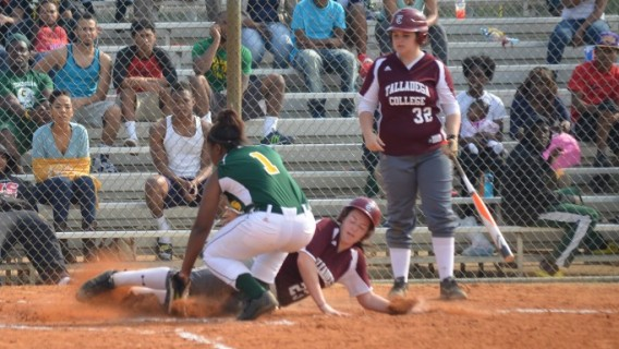 Photo for Softball Team Picked Third in Unaffiliated - A.I.I./GCAC Pre Season Rankings